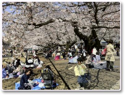 東工大の桜花見
