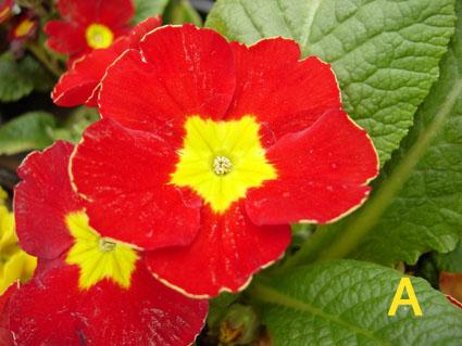 花の生殖の工夫