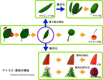 植物アトラス